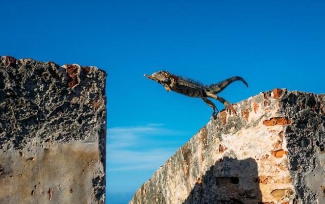choose-success-leap